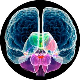 Мозг при энцефалопатии