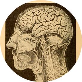 Рисунок мозга из книги
